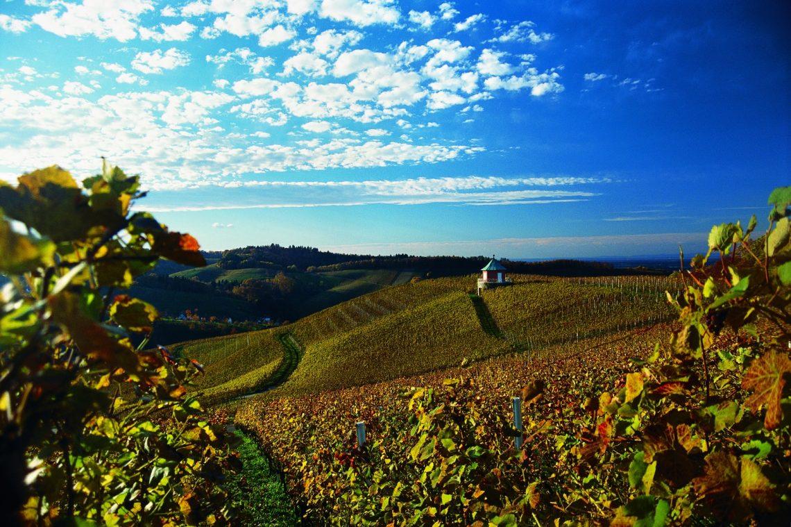 Weinlandschaft - NR Weinparadies Ortenau